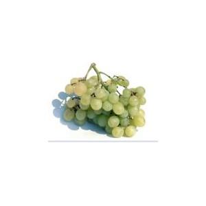raisin blanc aledo espâgne