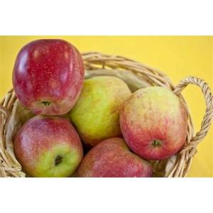 pommes à croquer de st laurent diverses variétés