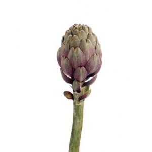 Artichaut Violet bouquet